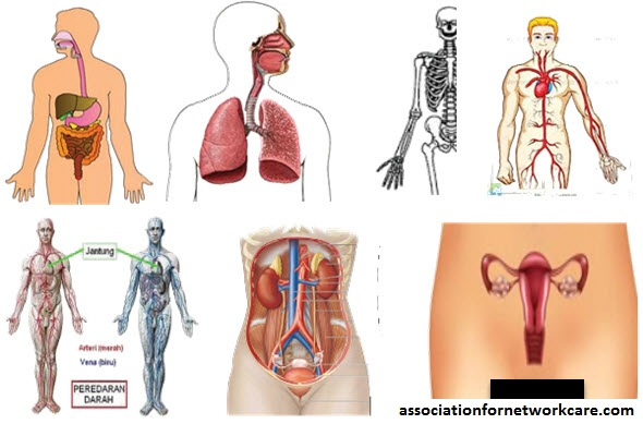 Mengulas Komunitas Klasifikasi Internasional Pada Fungsi Organ, Kecacatan dan Kesehatan